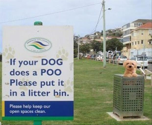 funny-signs-dogs.jpg