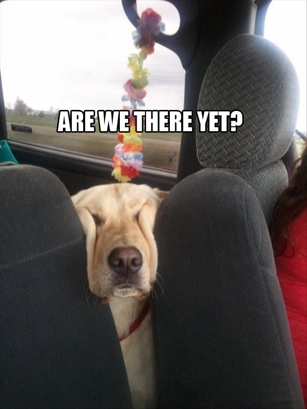 Funny-dog-Are-we-there-yet.jpg